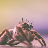 昆虫食を嗜む会